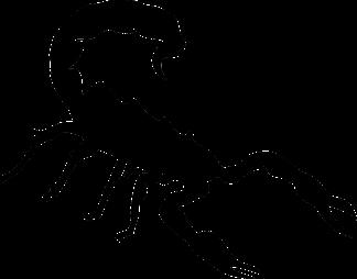 scorpion-154957_1280